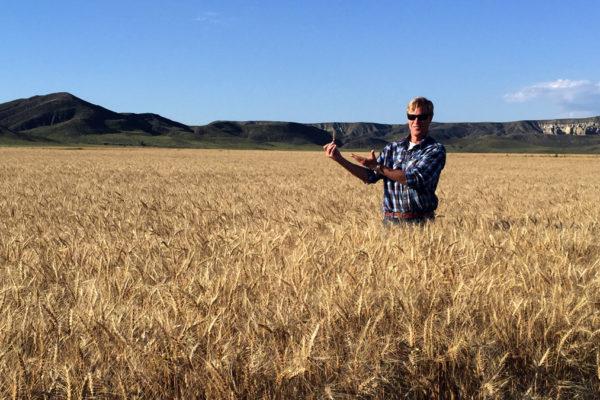 ED-wheat-SA-Ranch